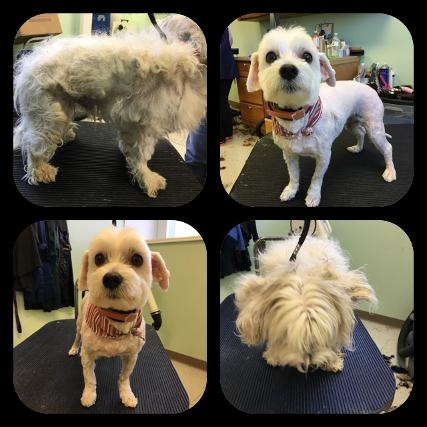 //www.kennedysanimalclinic.com/wp-content/uploads/2019/01/grooming3.jpg