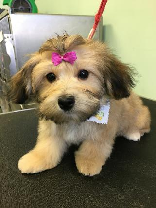 //kennedysanimalclinic.com/wp-content/uploads/2019/01/grooming4.jpg